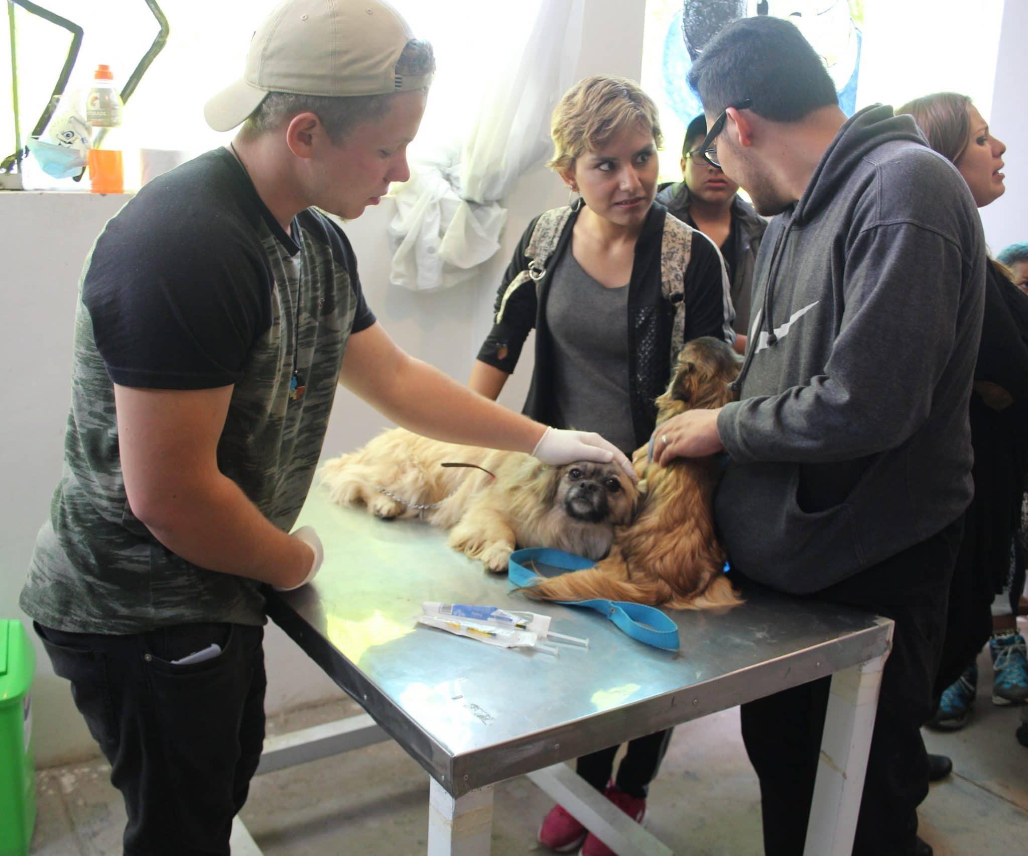 vrijwilligerswerk met honden